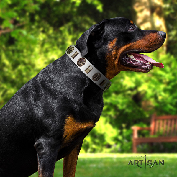 Rottweiler everyday use genuine leather collar for your attractive doggie