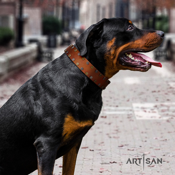 Rottweiler daily use leather collar for your beautiful dog