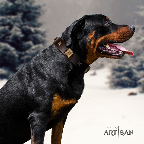 Rottweiler comfortable wearing full grain leather collar for your attractive canine