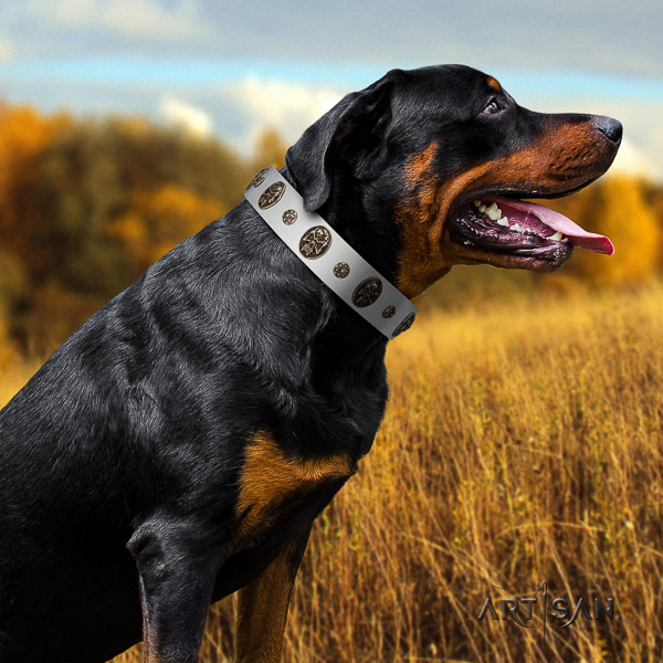 Rottweiler everyday use full grain natural leather collar for your handsome canine