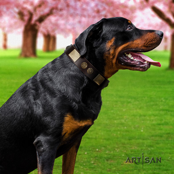 Rottweiler stylish walking full grain genuine leather collar for your attractive four-legged friend