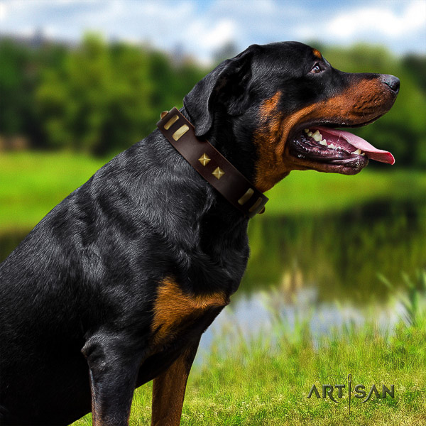 Rottweiler daily use leather collar for your attractive pet