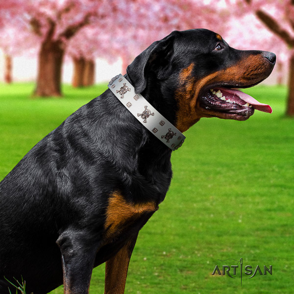 Rottweiler comfortable wearing leather collar for your lovely pet