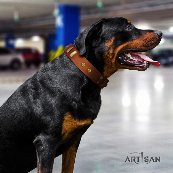 Rottweiler everyday walking full grain leather collar for your attractive pet