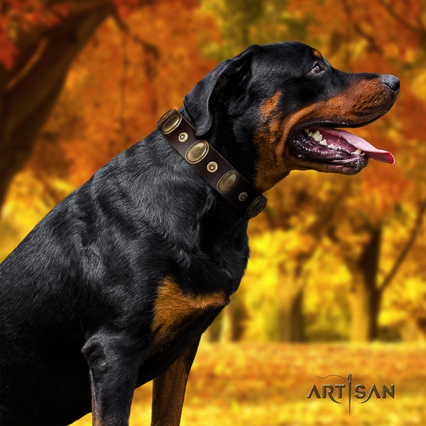 Rottweiler walking full grain leather collar for your handsome four-legged friend
