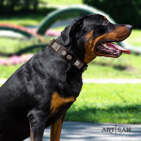 Rottweiler fine quality collar with awesome adornments for your canine
