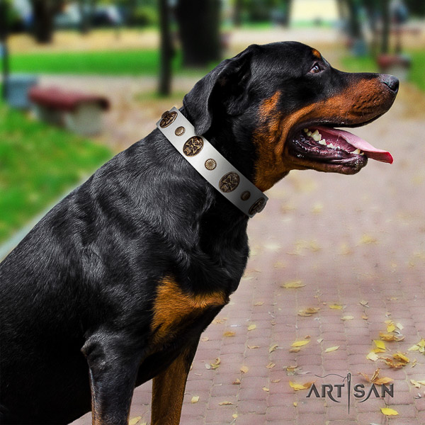 Rottweiler fancy walking full grain natural leather collar for your stylish four-legged friend