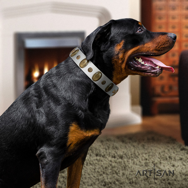 Rottweiler everyday walking full grain leather collar for your beautiful dog
