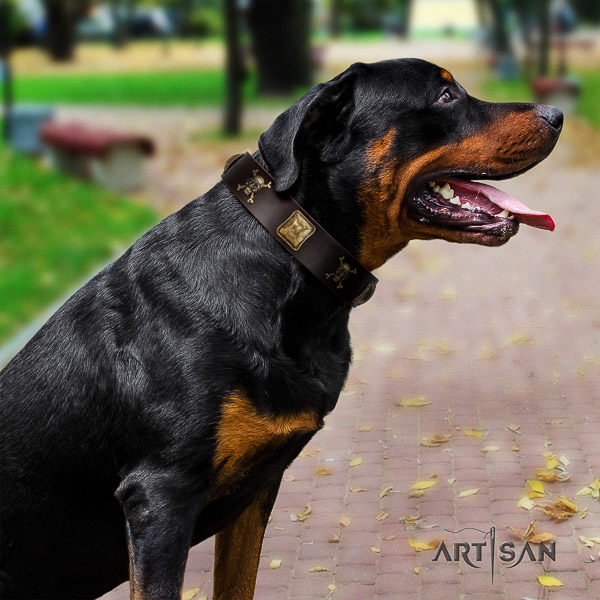 Rottweiler comfy wearing full grain natural leather collar for your impressive doggie