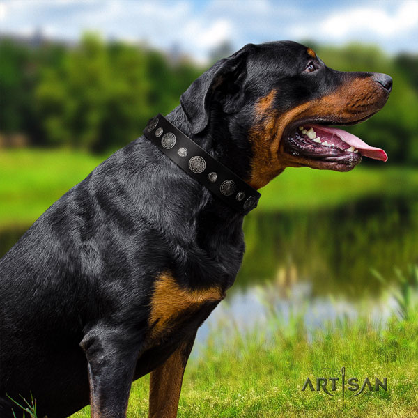 Rottweiler easy adjustable collar with fashionable embellishments for your four-legged friend