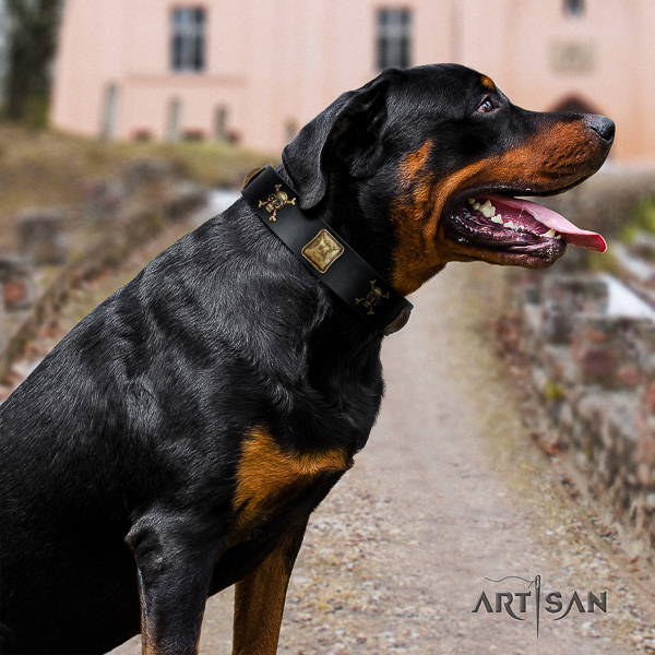 Rottweiler handy use full grain leather collar for your lovely canine