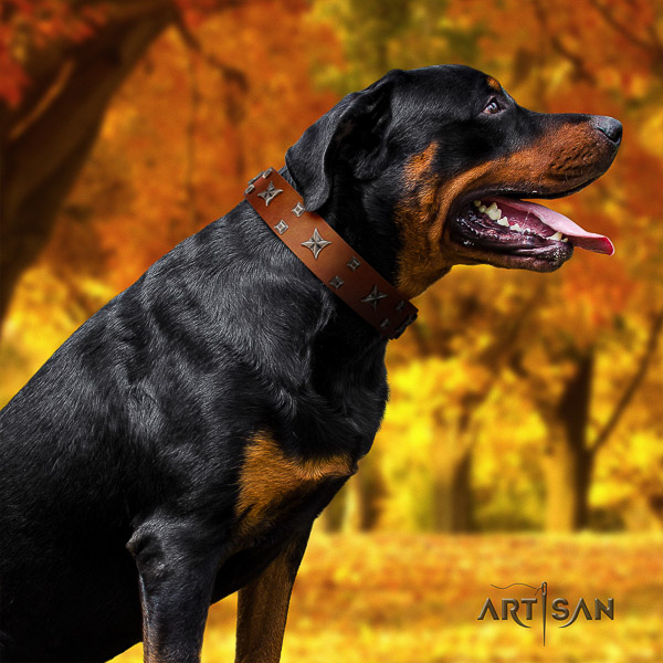 Rottweiler everyday walking leather collar for your beautiful canine
