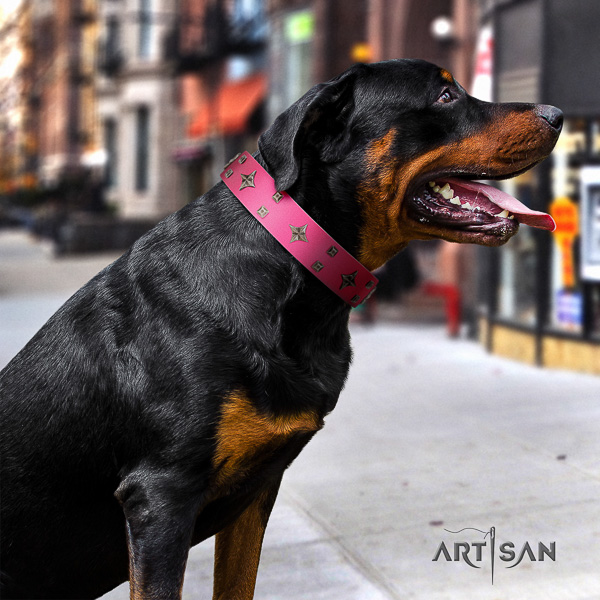 Rottweiler comfortable wearing genuine leather collar for your lovely four-legged friend