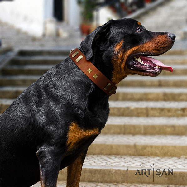 Rottweiler comfortable wearing full grain genuine leather collar for your impressive four-legged friend