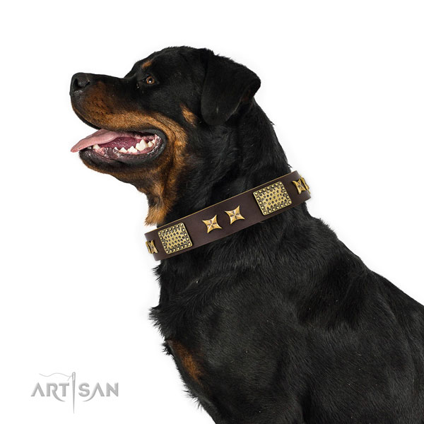Rottweiler stunning genuine leather dog collar for handy use
