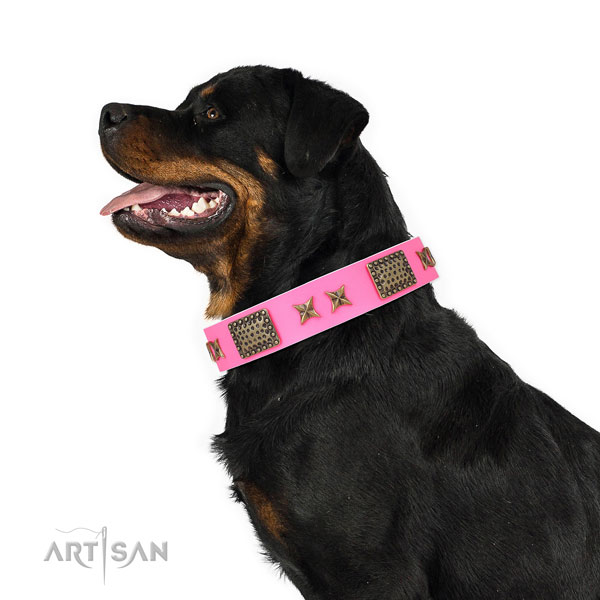 Rottweiler trendy genuine leather dog collar for everyday use