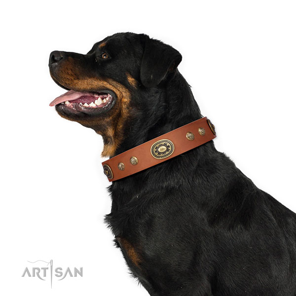 Rottweiler embellished full grain natural leather dog collar for stylish walking