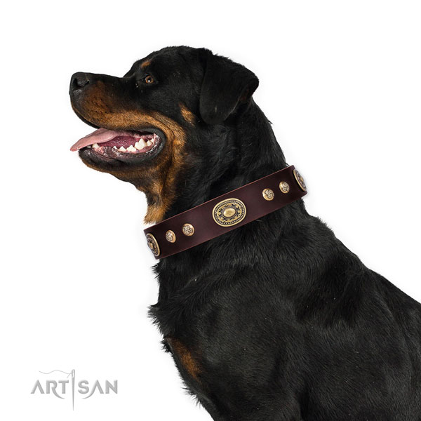 Rottweiler convenient full grain genuine leather dog collar for stylish walking