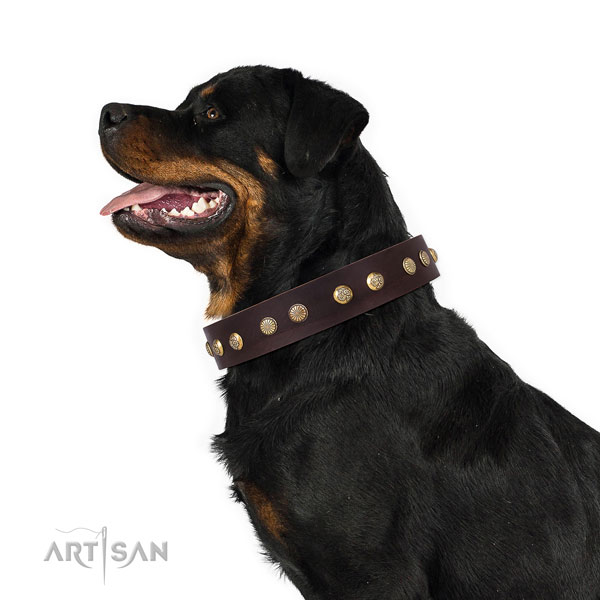 Rottweiler handcrafted full grain natural leather dog collar for walking