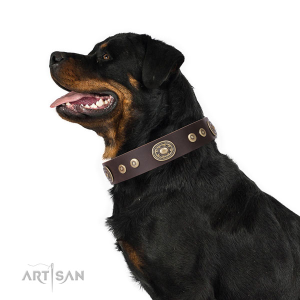 Rottweiler adorned natural genuine leather dog collar for daily use