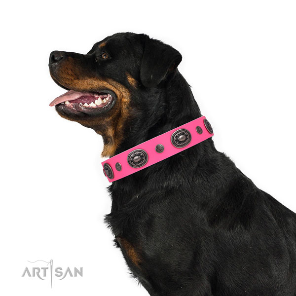 Rottweiler adorned natural genuine leather dog collar for stylish walking