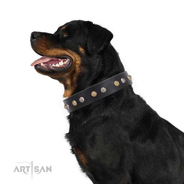 Rottweiler extraordinary natural genuine leather dog collar for handy use