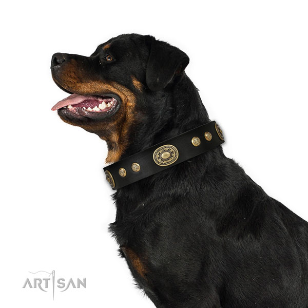 Rottweiler comfortable full grain leather dog collar for walking