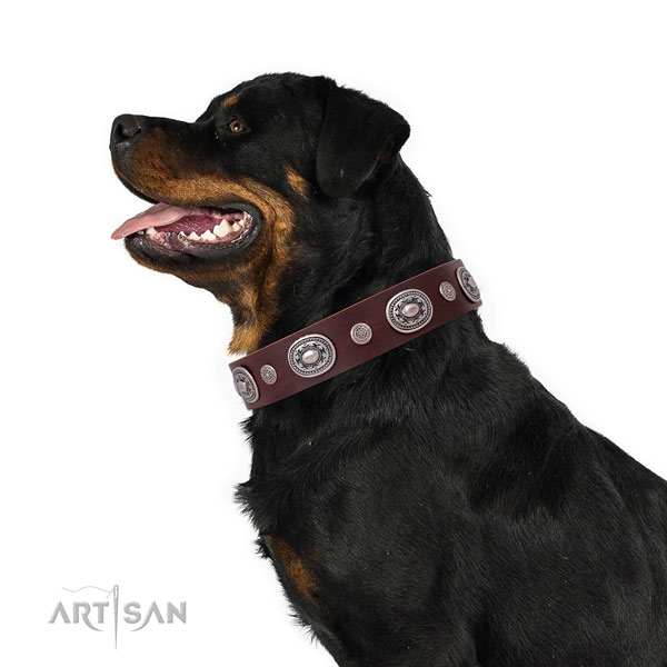 Rottweiler handcrafted full grain leather dog collar for stylish walking