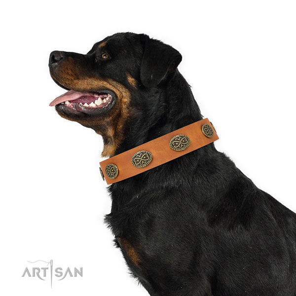 Rottweiler adorned natural genuine leather dog collar for handy use