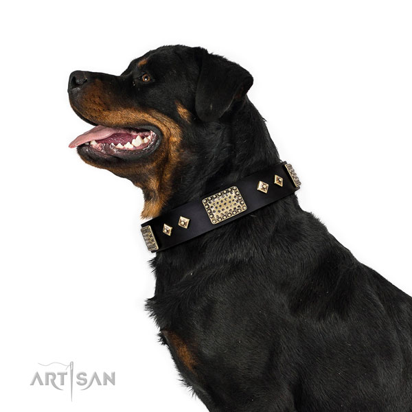 Rottweiler designer full grain genuine leather dog collar for comfy wearing