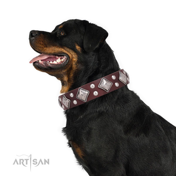 Rottweiler easy to adjust full grain genuine leather dog collar for walking