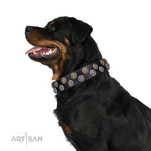 Rottweiler stylish genuine leather dog collar for fancy walking