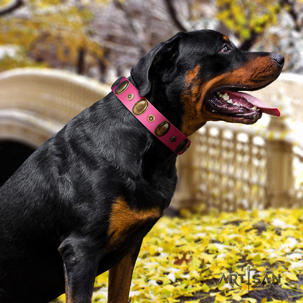 Rottweiler stylish walking full grain natural leather collar for your handsome doggie