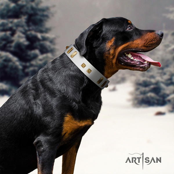 Rottweiler comfy wearing full grain leather collar for your handsome doggie