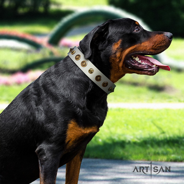 Rottweiler everyday walking full grain leather collar for your lovely canine