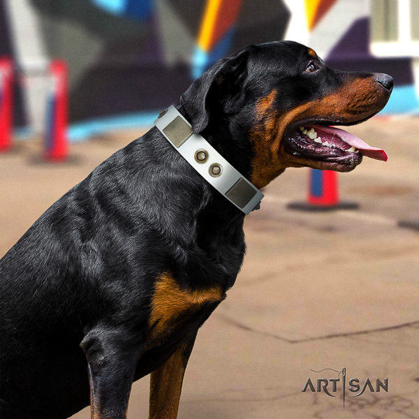 Rottweiler everyday walking full grain genuine leather collar for your stylish dog