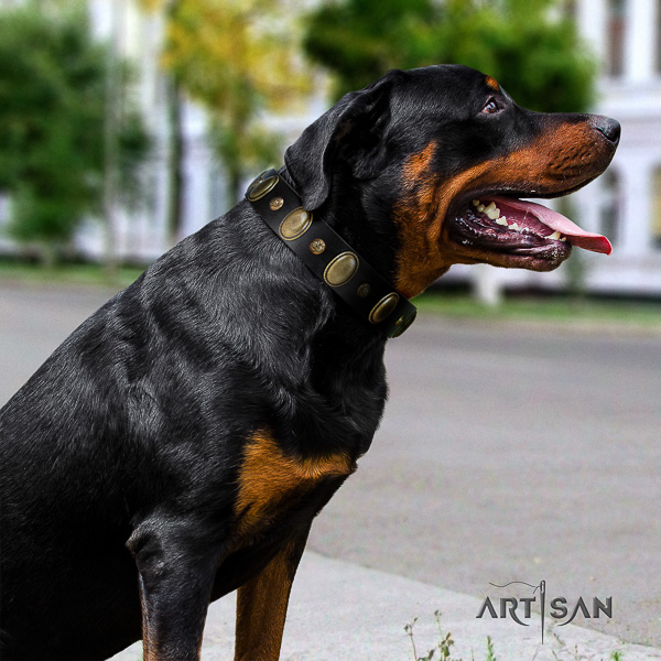 Rottweiler stylish walking genuine leather collar for your impressive pet