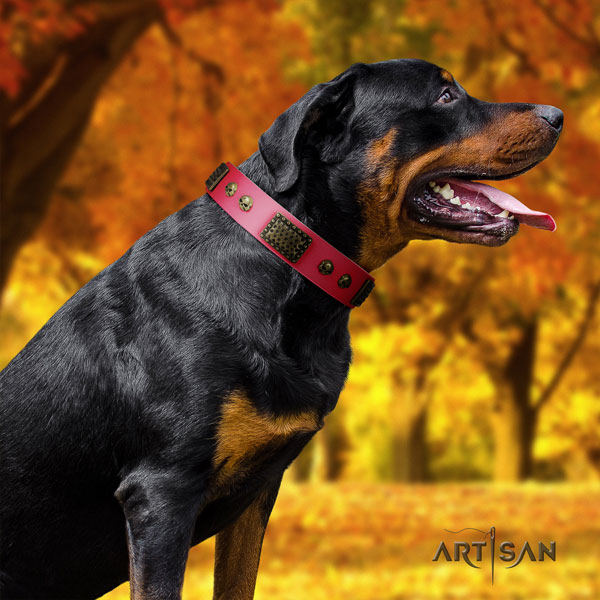 Rottweiler easy to adjust full grain leather dog collar with exceptional decorations