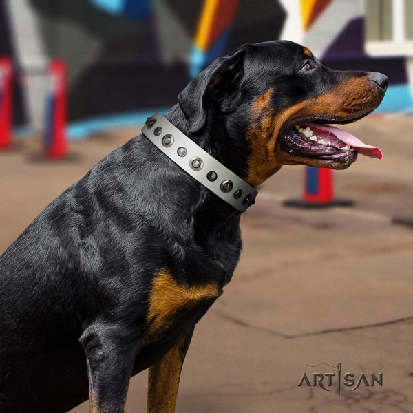 Rottweiler perfect fit collar with stylish design decorations for your pet