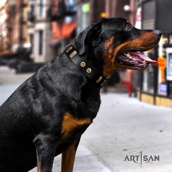 Rottweiler fancy walking natural leather collar for your lovely pet
