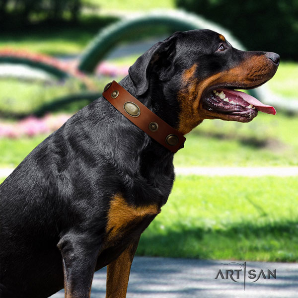 Rottweiler easy wearing full grain natural leather dog collar with trendy adornments