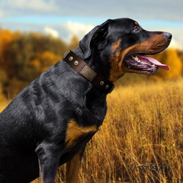 Rottweiler handcrafted natural genuine leather dog collar with significant embellishments