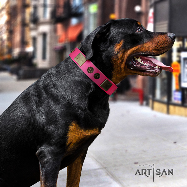 Rottweiler basic training genuine leather collar for your handsome dog