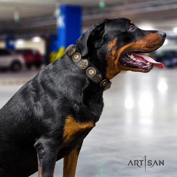 Rottweiler daily use natural leather collar for your handsome doggie