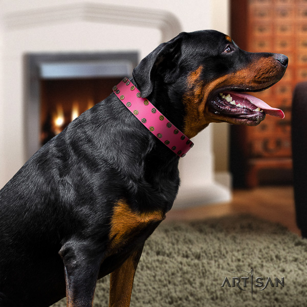 Rottweiler daily walking full grain leather collar for your impressive four-legged friend