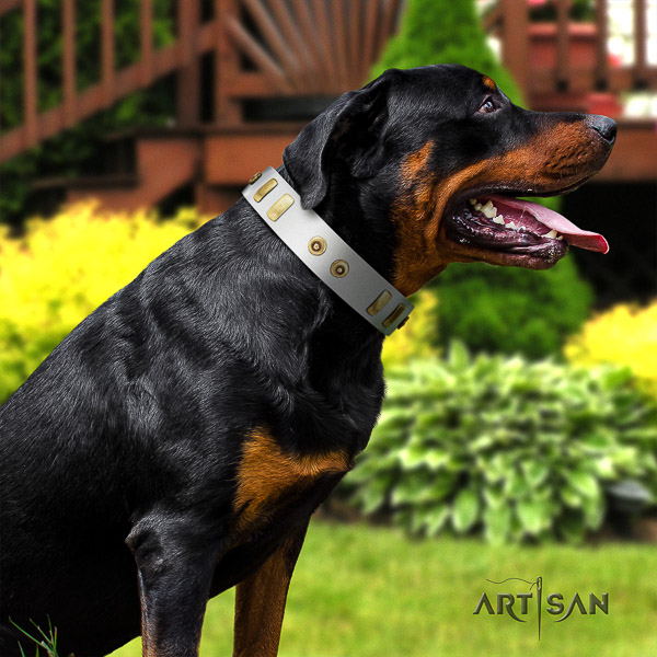 Rottweiler daily use full grain leather collar for your handsome pet
