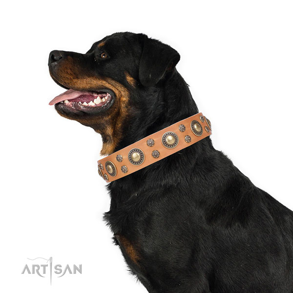 Rottweiler extraordinary full grain genuine leather dog collar for everyday walking