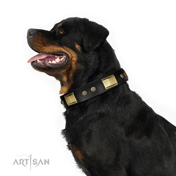 Rottweiler inimitable full grain genuine leather dog collar for daily use
