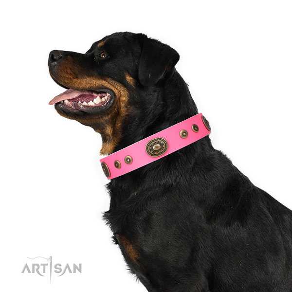 Rottweiler incredible natural genuine leather dog collar for comfy wearing