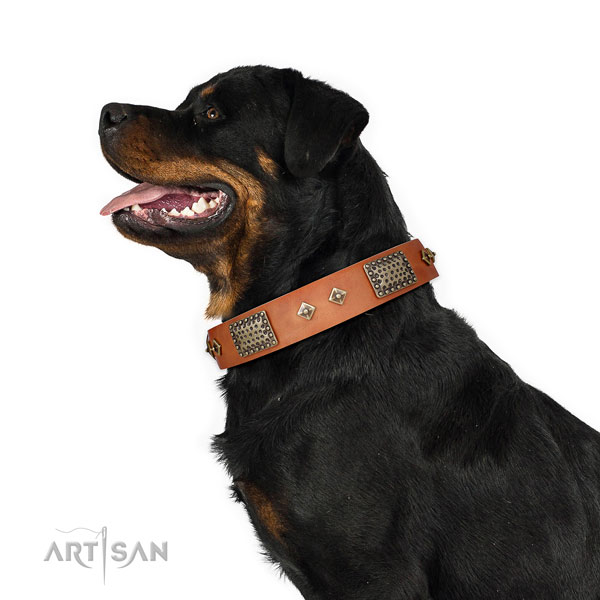 Rottweiler exceptional full grain genuine leather dog collar for daily walking